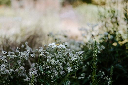 titchfield gardeners club wildflowers.jp