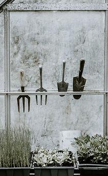 titchfield gardeners club gardening tips