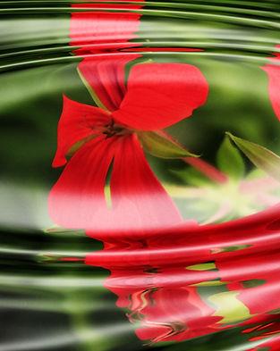 background-geranium-relaxation-55813.jpg