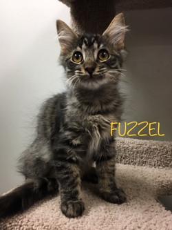 Fuzzel1