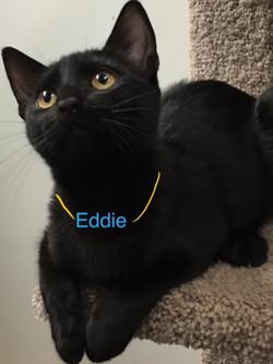 Eddie1