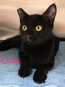 Evita2