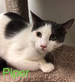 Piper2