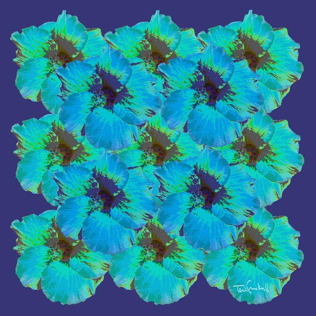 BLUE HIBISCUS
