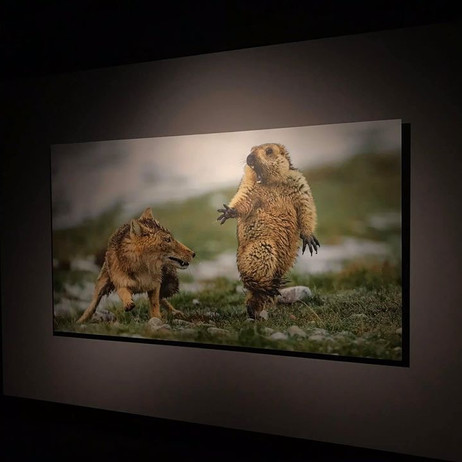 Jury pour le concours photo dans le cadre de l'exposition Wild Life Photographer of The Year