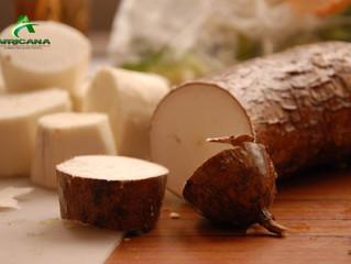 CAMEROUN:Plus de 720 000 boutures de manioc distribuées aux producteurs camerounais