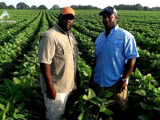 SENEGAL - SUBVENTIONS : quand l'Etat enrichit les opérateurs économiques au détriment des agricu