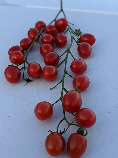 Grape Tomato W