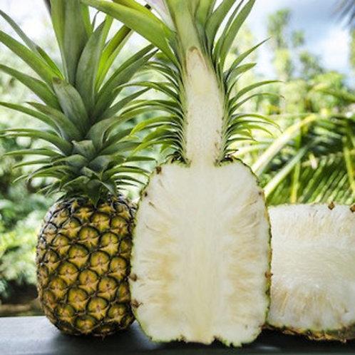 Pineapple - White/Sugarloaf W