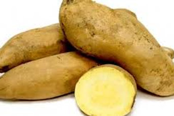 Sweet Potato - Yellow