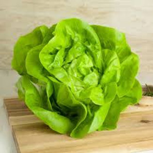 Butterhead Lettuce W