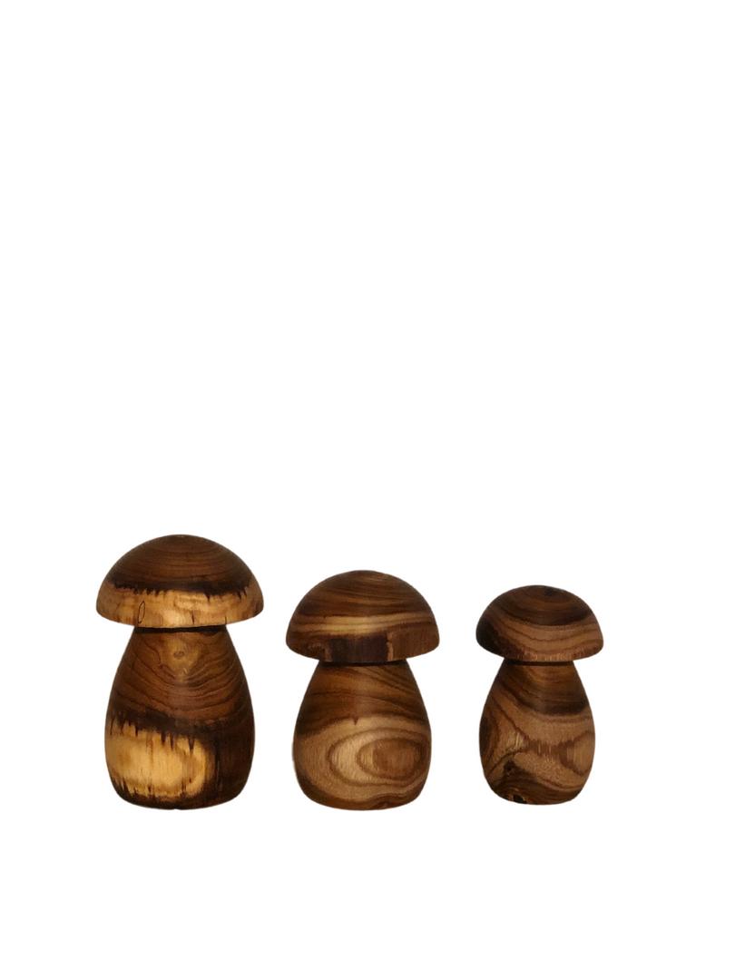 3 træsvampe i forskellige størrelser
