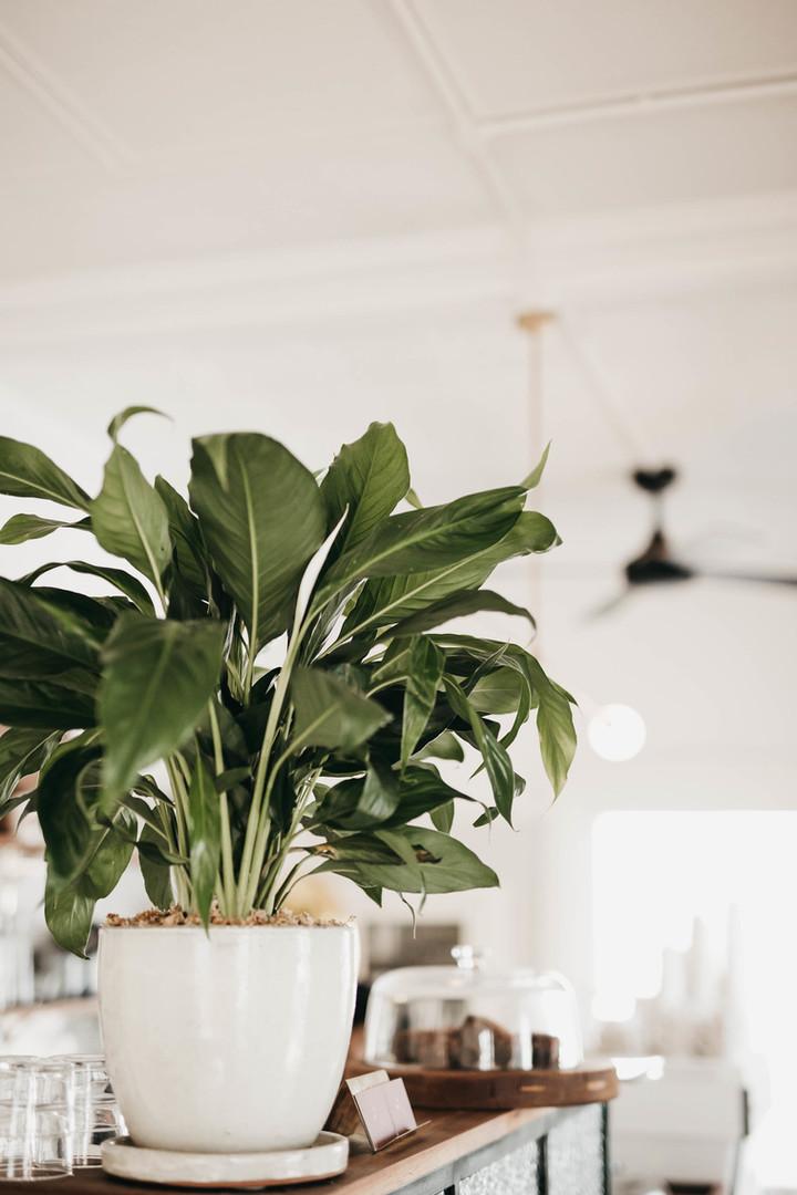 Indoor plant fan shot.jpg