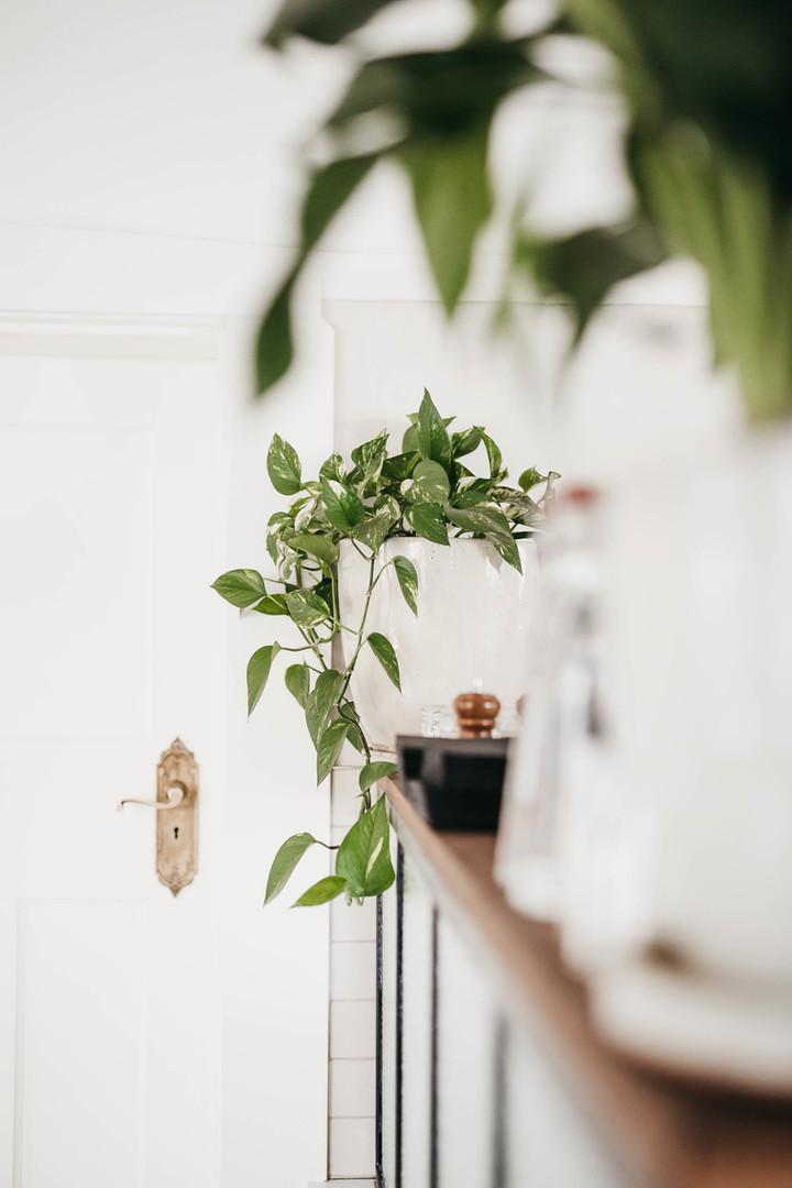 Plants and door.jpg