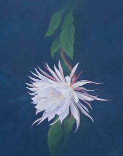 Tan Hau Flower