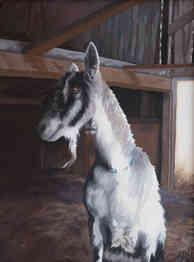 Trillium Hill Goat
