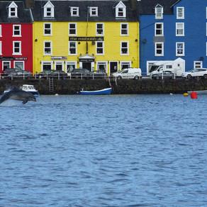 Follow the Hebridean Whale Trail