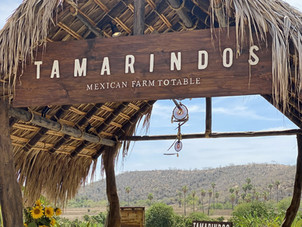 Farm to Table Wedding Venues in San Jose del Cabo