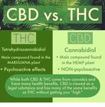 The CBD Wellness Connection