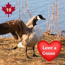 #10. Love a Goose