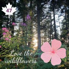 #47. Go Admire the Wild Flowers