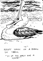 Sleepy Seagul