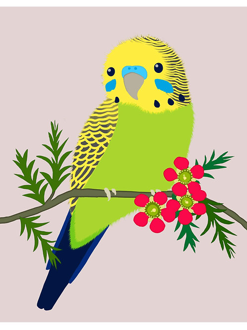 Green Budgerigar on Grey