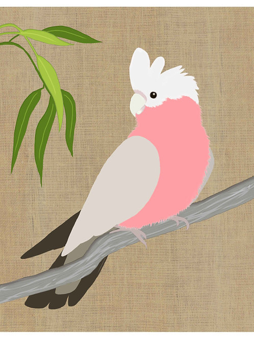 Pink Galah on hessian background