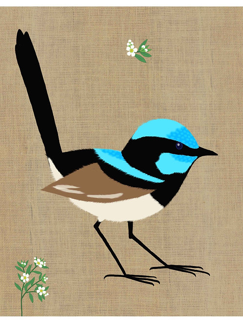 Superb Fairy Wren on hessian background