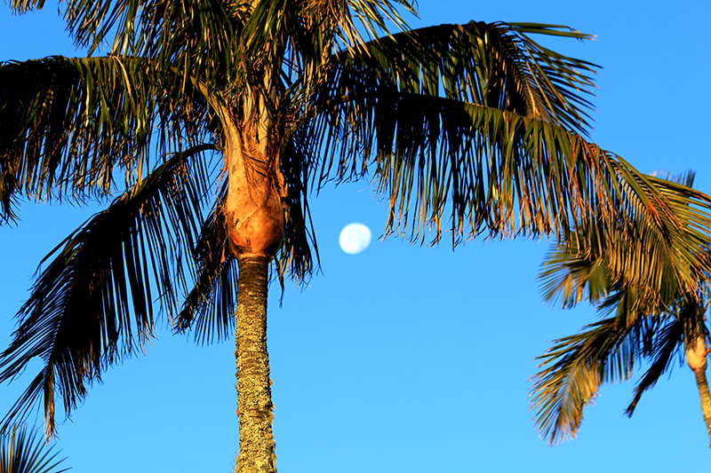 Nice-time-in-Santa-Marta.png