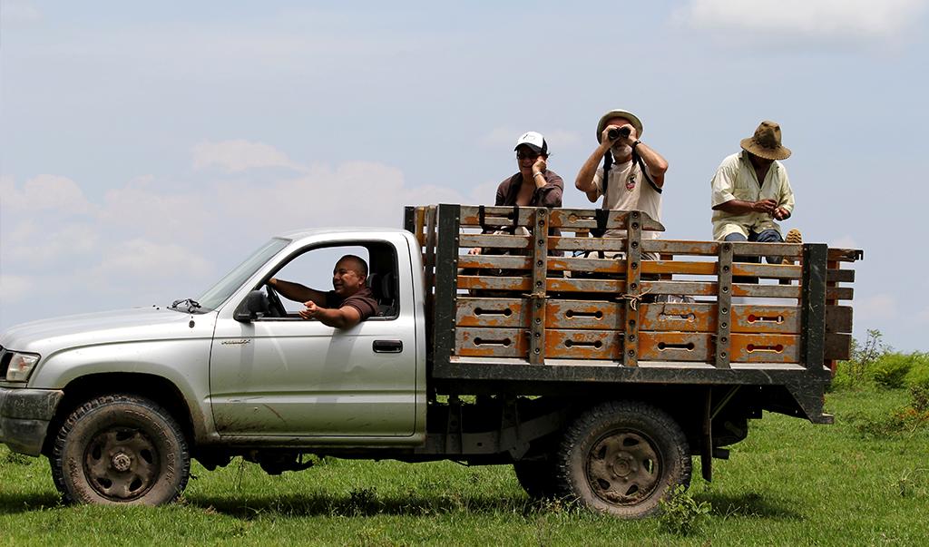 Birding in Llanos