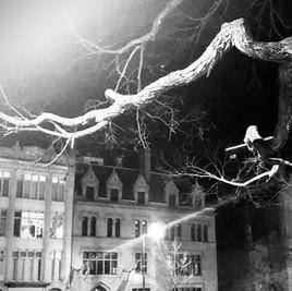 State Street at Night, Albany NY