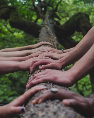 Ensemble, les mains posées sur une branche d'arbre