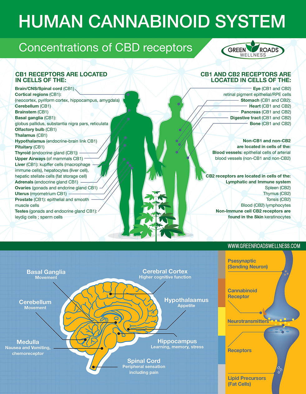 Infographic-CBD-SYSTEM.jpg