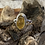Thumbnail: Amber and Sterling Silver Ring