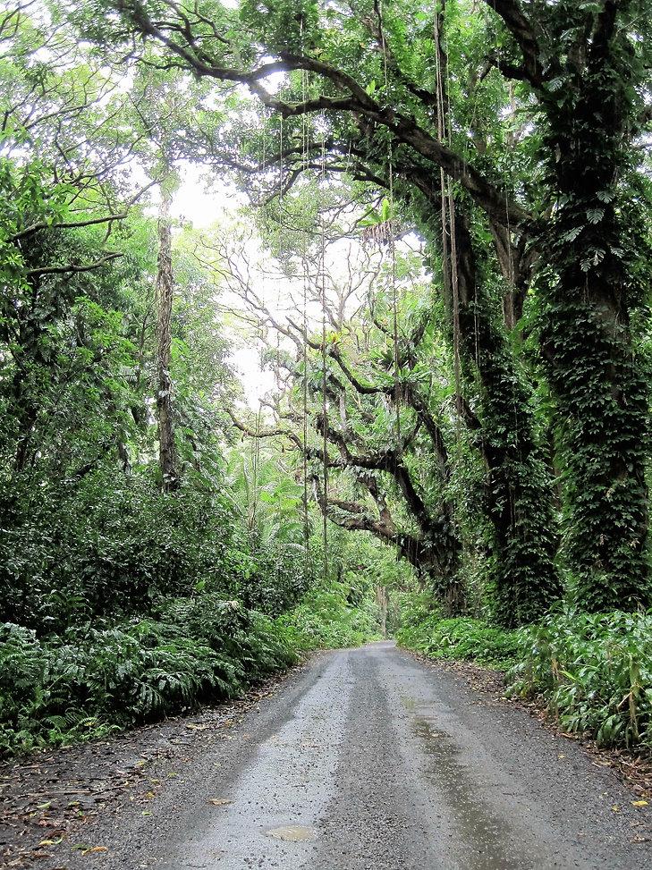 Puna Pahoa Big Island