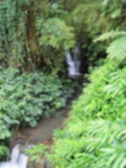 Big Island waterfall Hilo