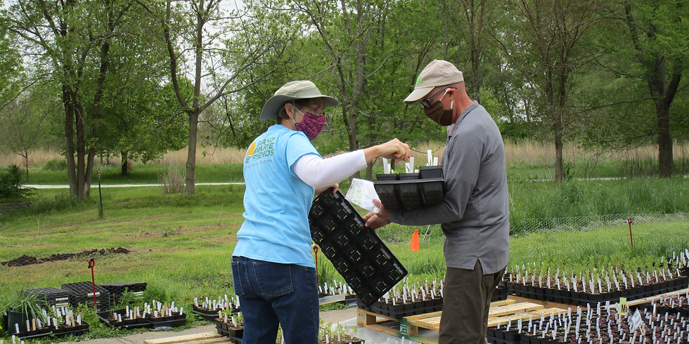 Volunteer for the Native Plant Sale