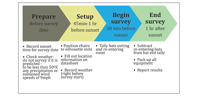 bat survey graphic.png