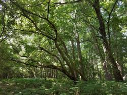 WarblerRidgeTrees.jpg