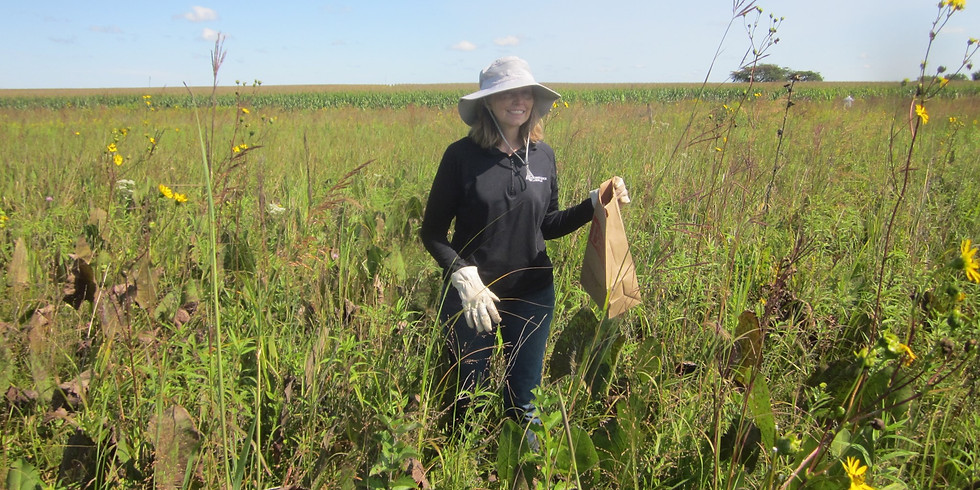 Shortline Prairie Fall Seed Collection & Brush Cleanup