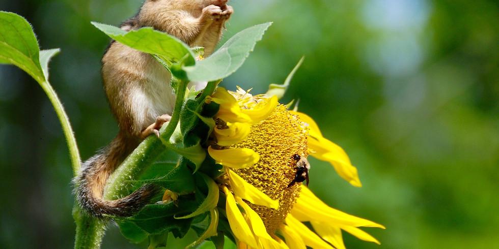 4-H Mini Day Camp: Biodiversity in Your Backyard