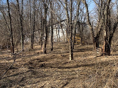 AJ Farm Tree Removal 7.jpg