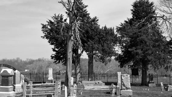 Big Shoal Tree.jpg