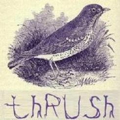 thrush_gravatar_4_2.jpg