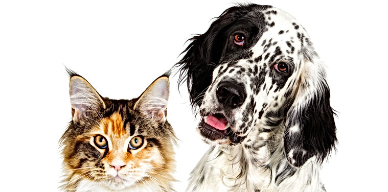 Dog and cat portrait.jpg