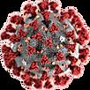 SARS-CoV2-virion-e1582409571559.png