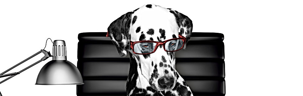 Dalmatian dog in glasses is doing some w