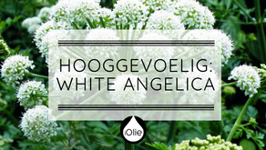 White Angelica 15ml