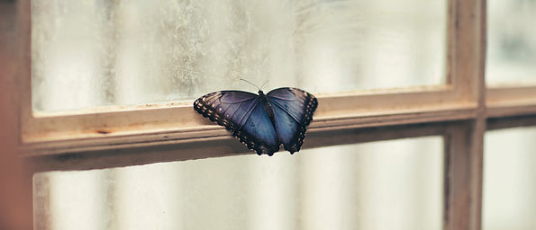 A butterfly which has landed on a window frame